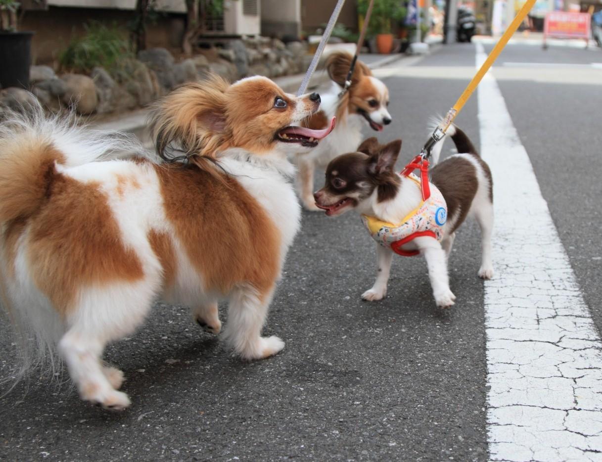 初散歩リベンジ_a0027126_21545945.jpg