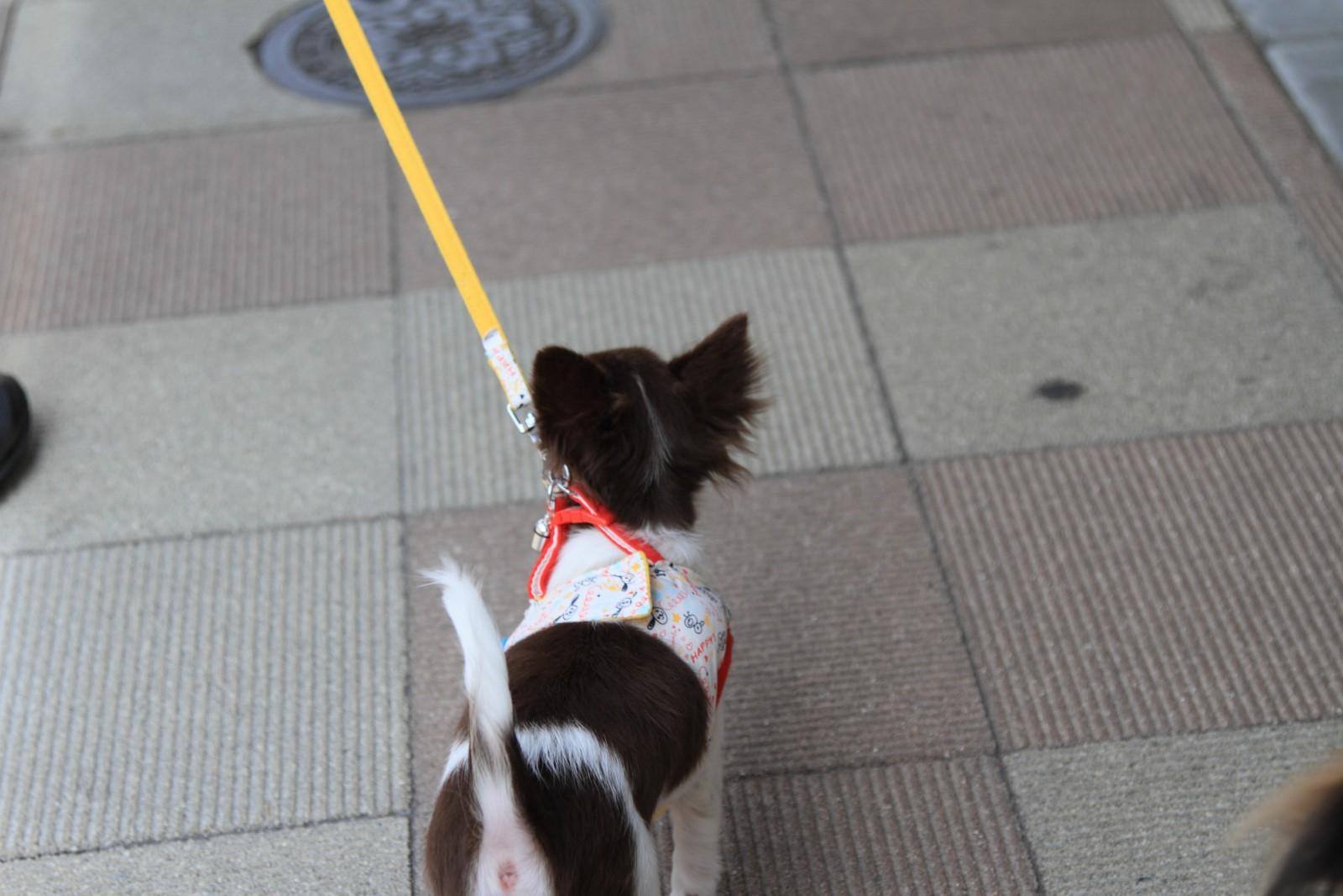 初散歩リベンジ_a0027126_2155261.jpg
