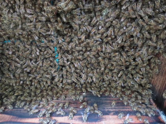 ミツバチの巣箱掃除_d0231263_23323156.jpg