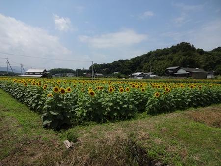 猪ノ鼻峠を越えて香川へ_e0201281_22460100.jpg