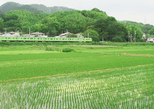 田園風景を走る緑のJR_f0266284_23195153.jpg