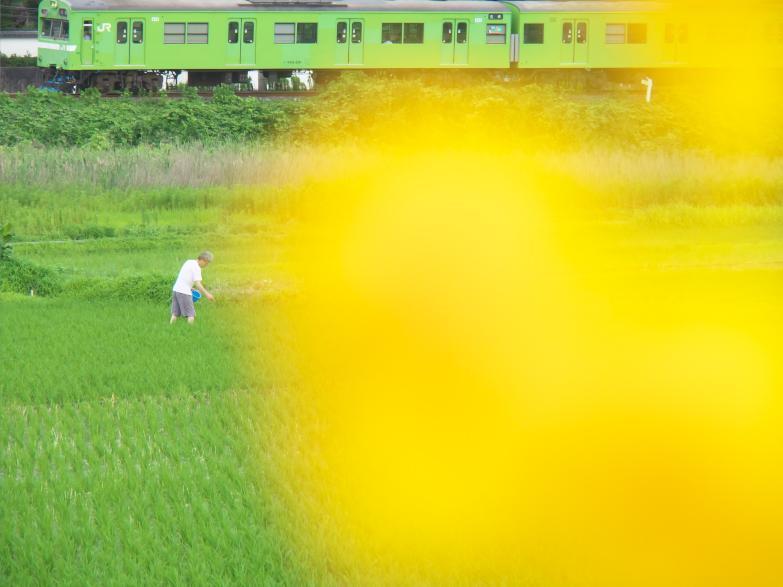 田園風景を走る緑のJR_f0266284_23195670.jpg