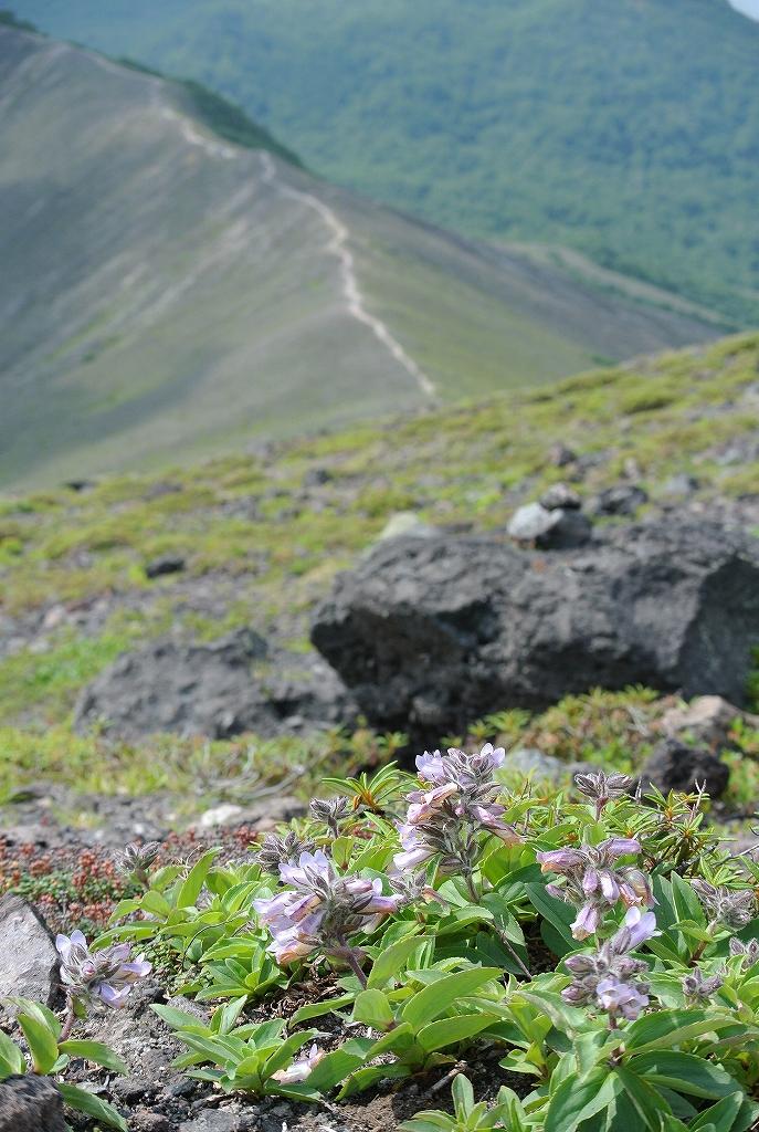 7月6日、樽前山-その2-_f0138096_11302445.jpg