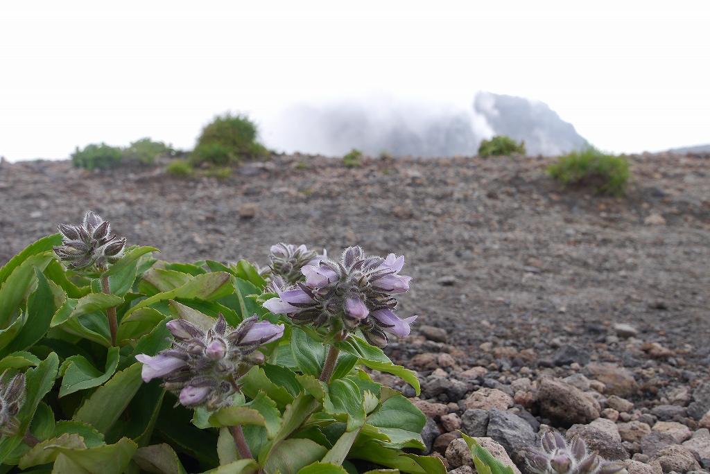 7月6日、樽前山-その2-_f0138096_11312057.jpg
