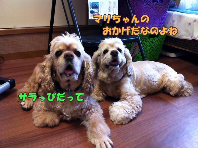 b0067012_1175578.jpg