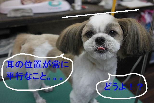 b0130018_0151533.jpg