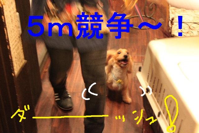 b0130018_081946.jpg