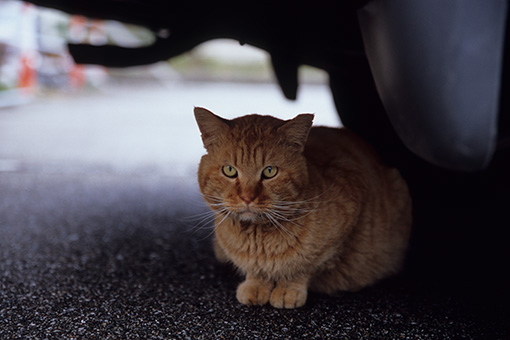 魚津の猫・関西2013_b0259218_1485116.jpg