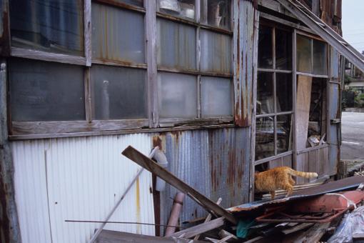 魚津の猫・関西2013_b0259218_1485895.jpg