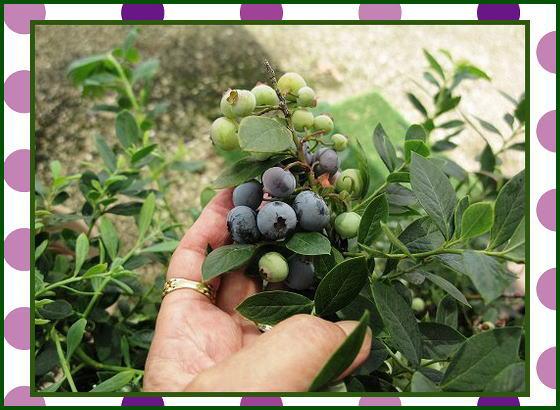 もうすぐ収穫_e0072023_16244365.jpg