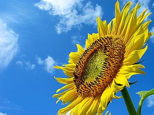 いよいよ夏本番!ですやん!_f0056935_19561097.jpg