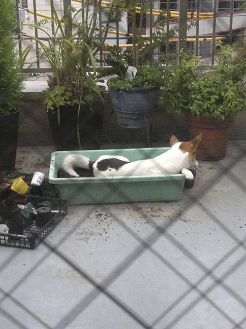 暑さと犬_b0156872_13331119.jpg