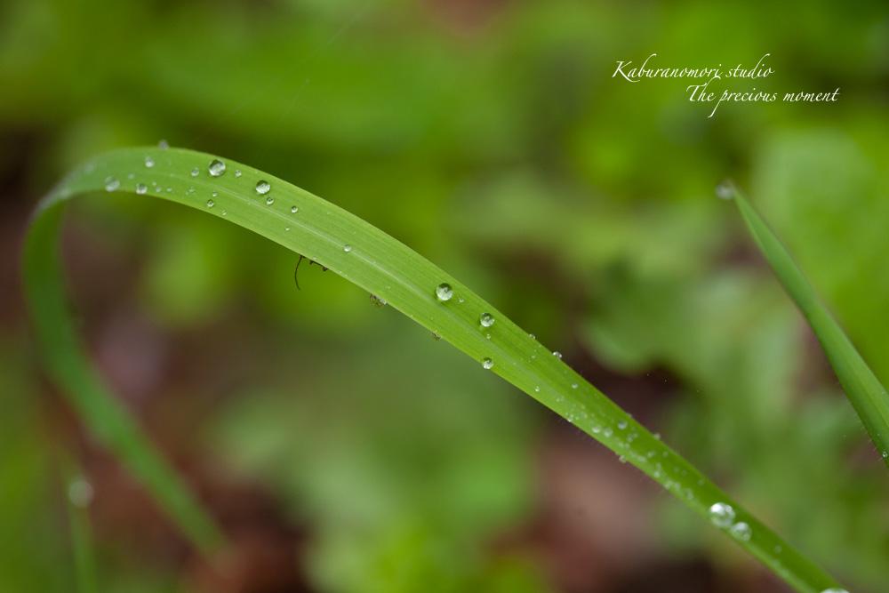 梅雨明けの朝_c0137403_224042.jpg