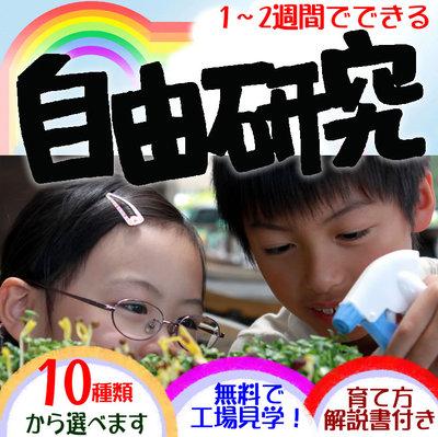 ♪新鮮 発芽野菜通信『暑中見舞い』♪_d0063218_1052322.jpg