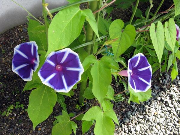 咲いてるよ!_f0129726_2220844.jpg