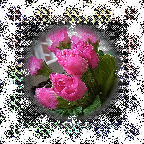 b0133752_1753794.jpg