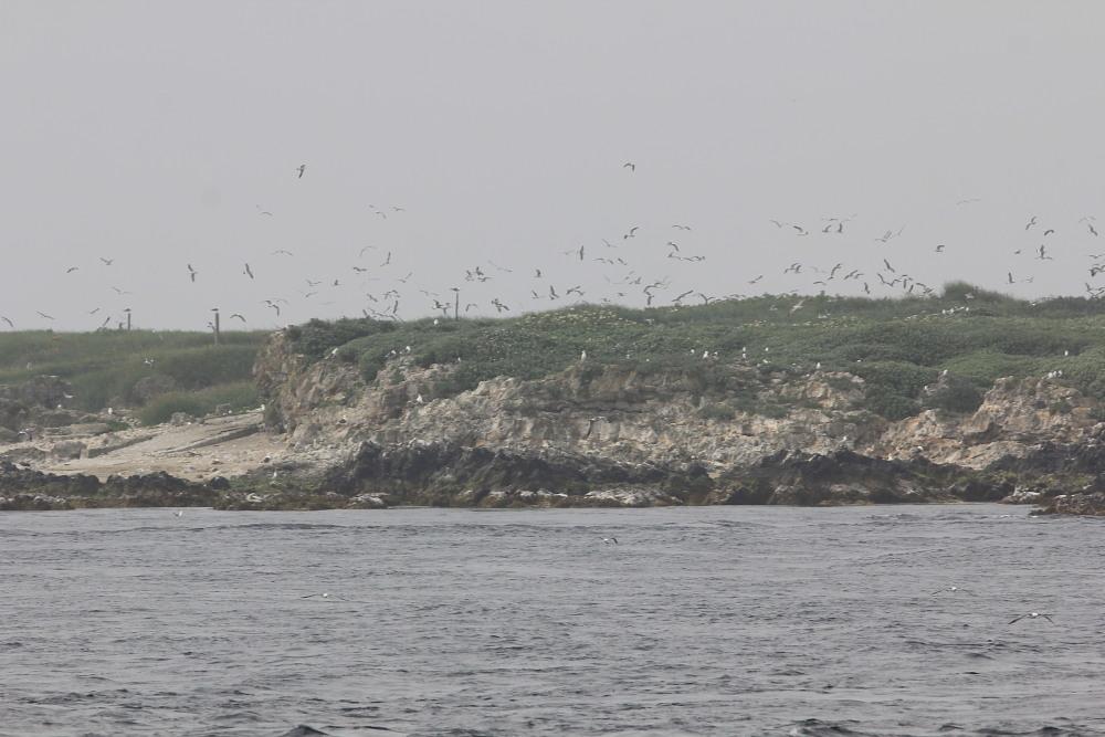 カバイロシジミ  下北半島も見るのは難しい。 2013.6.30青森県⑦_a0146869_4114140.jpg