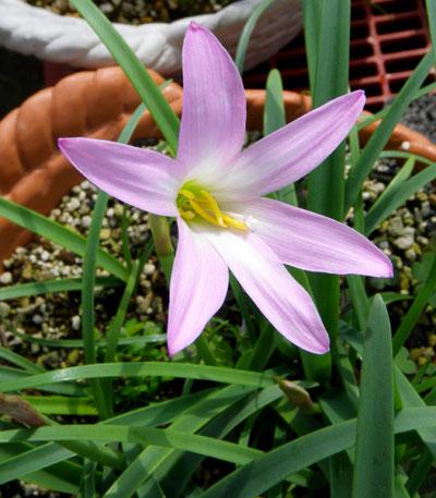 種から育った花を幾つか~♪_a0136293_1743719.jpg