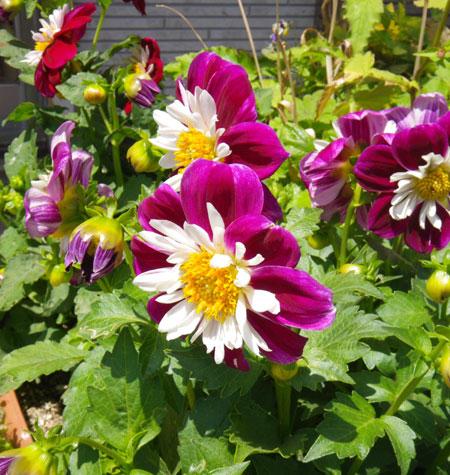 種から育った花を幾つか~♪_a0136293_1781816.jpg