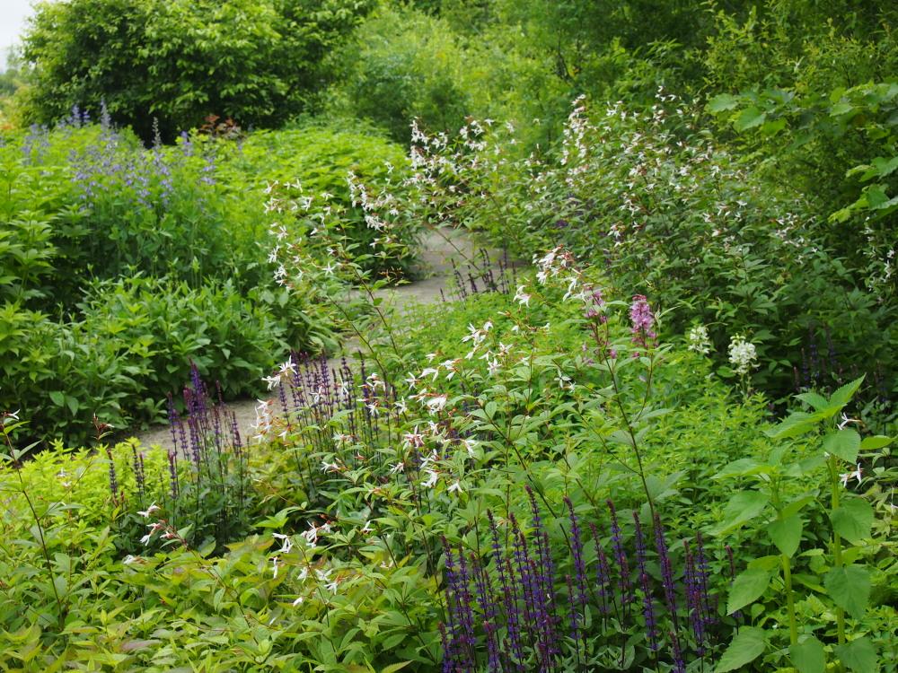 北海道ガーデン街道を訪ねて(5)十勝千年の森・メドウガーデン_f0276498_2330484.jpg