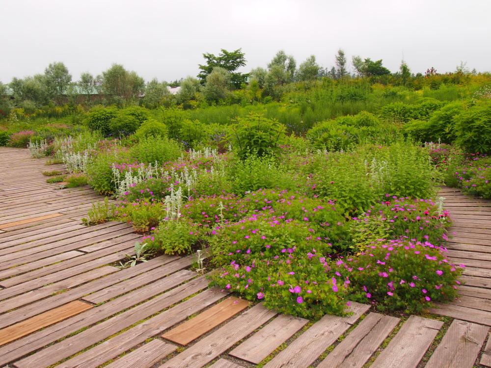 北海道ガーデン街道を訪ねて(5)十勝千年の森・メドウガーデン_f0276498_23324651.jpg