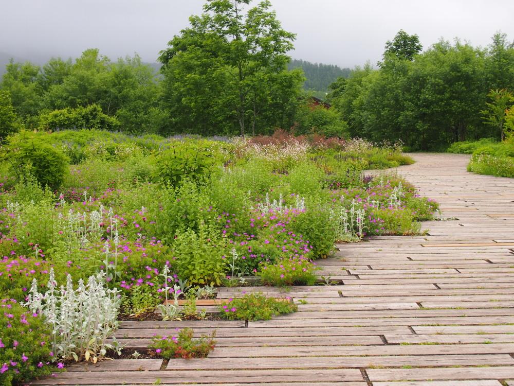 北海道ガーデン街道を訪ねて(5)十勝千年の森・メドウガーデン_f0276498_2334197.jpg