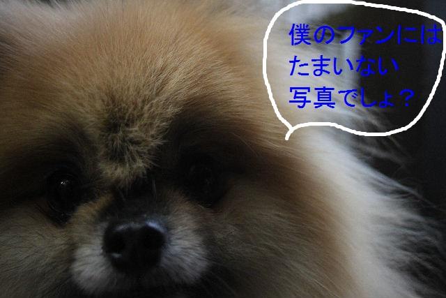 b0130018_21333936.jpg