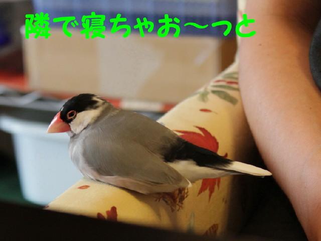 b0158061_081180.jpg