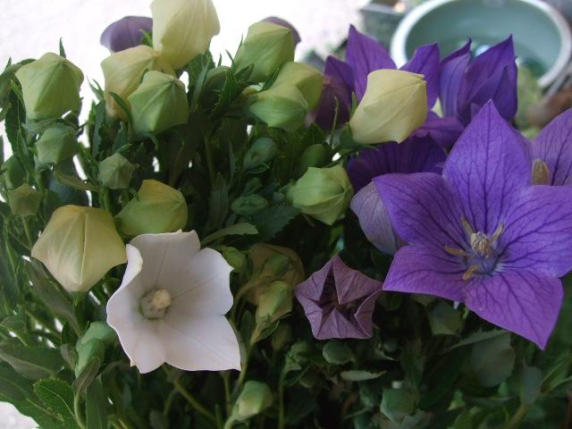 オークリーフ(紫と白)_f0049672_1441220.jpg