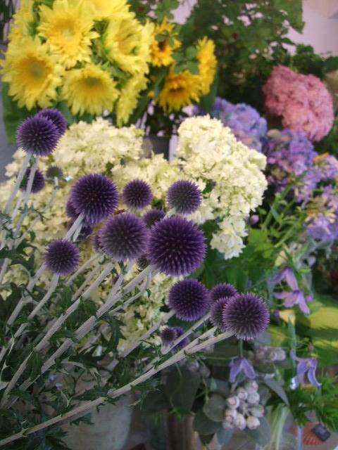 オークリーフ(紫と白)_f0049672_144279.jpg