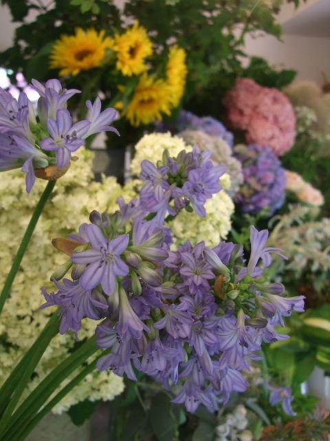 オークリーフ(紫と白)_f0049672_1451458.jpg
