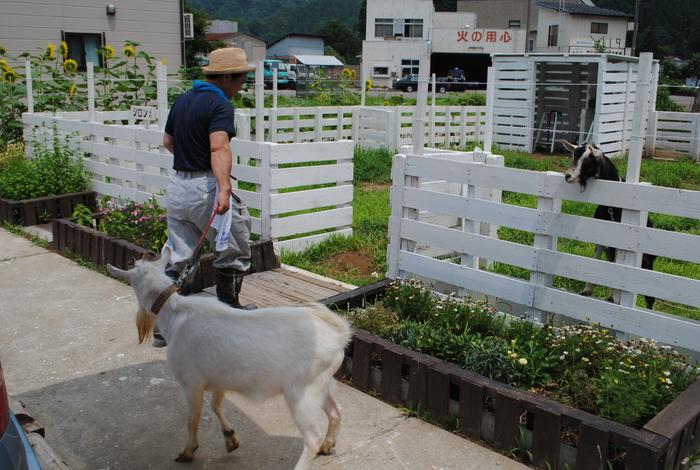 山羊のクロンが来た_c0267580_2154472.jpg