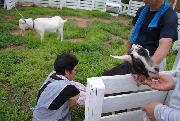 山羊のクロンが来た_c0267580_21562386.jpg