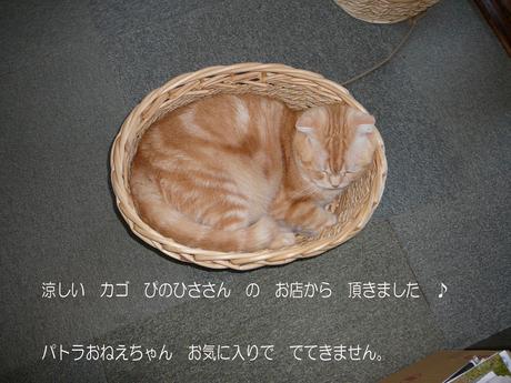 d0161423_16295649.jpg