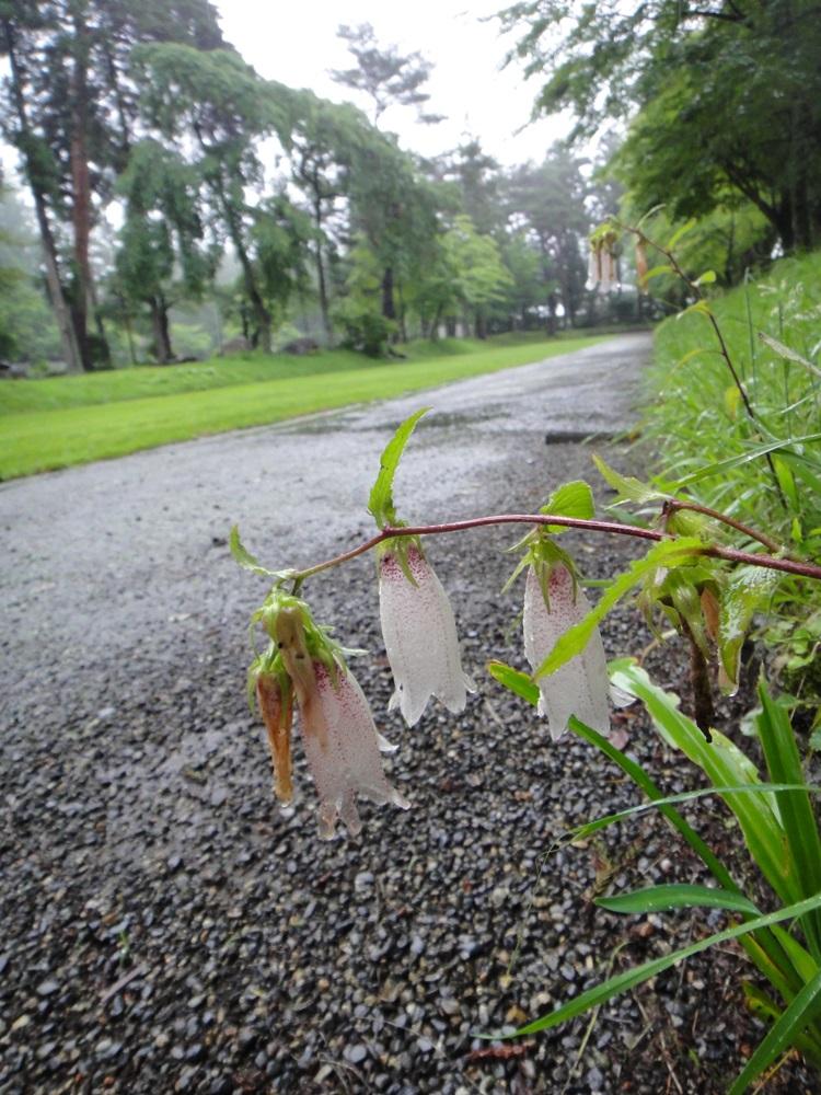 雨境内散歩_c0111229_17581328.jpg