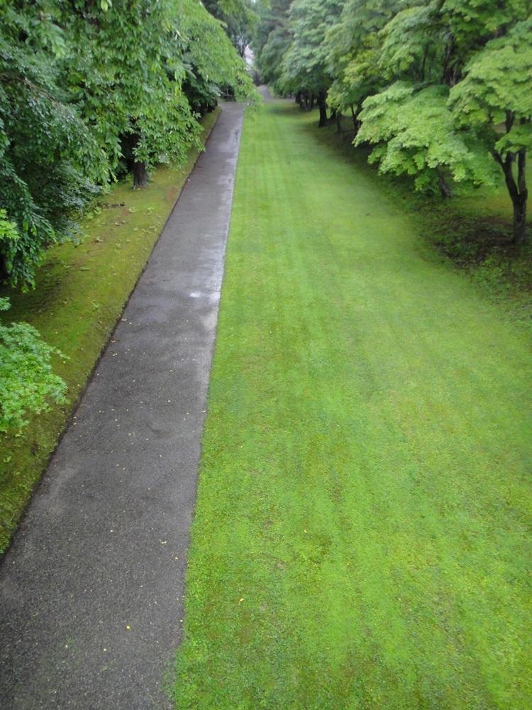 雨境内散歩_c0111229_17585450.jpg