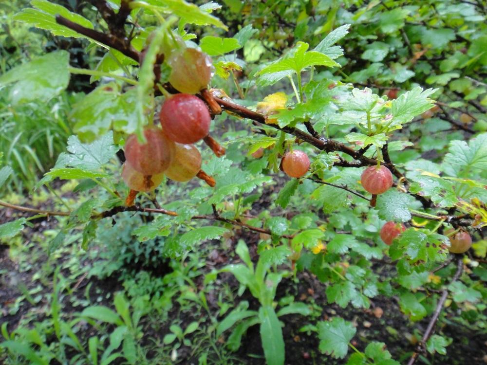 雨境内散歩_c0111229_17591449.jpg