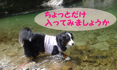 今年初泳ぎ_e0270846_12413123.jpg