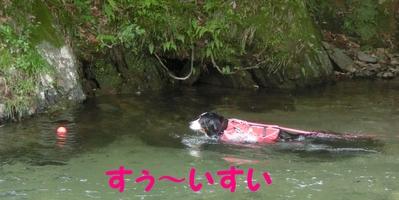今年初泳ぎ_e0270846_14561977.jpg