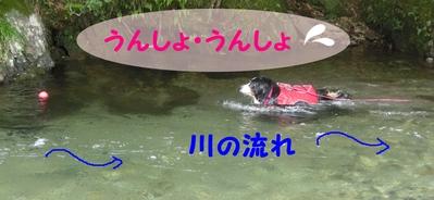 今年初泳ぎ_e0270846_15563659.jpg