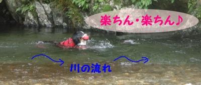 今年初泳ぎ_e0270846_1557272.jpg