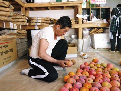 樹上完熟アップルマンゴー 煌(きらめき)はほんの1割の極選マンゴーなんです!!_a0254656_17453318.jpg