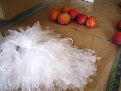 樹上完熟アップルマンゴー 煌(きらめき)はほんの1割の極選マンゴーなんです!!_a0254656_18401033.jpg
