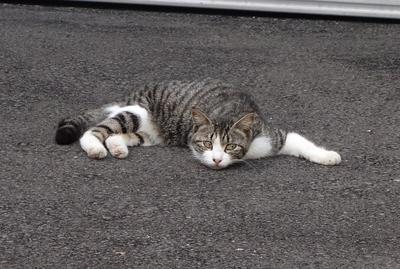 Melting Cat_c0193077_11574776.jpg