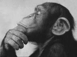 ジョーク:「沈思黙考」、無名の一理論物理学者の夢「最年長記録」!?_e0171614_9223331.jpg