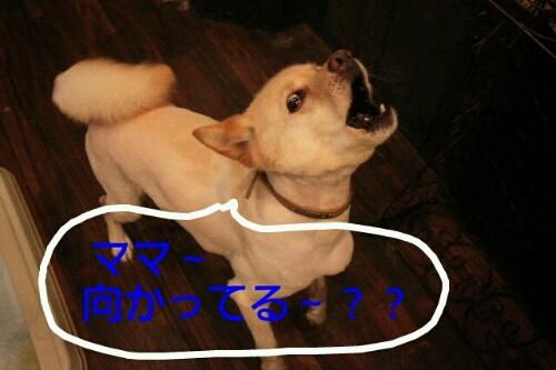 b0130018_001534.jpg