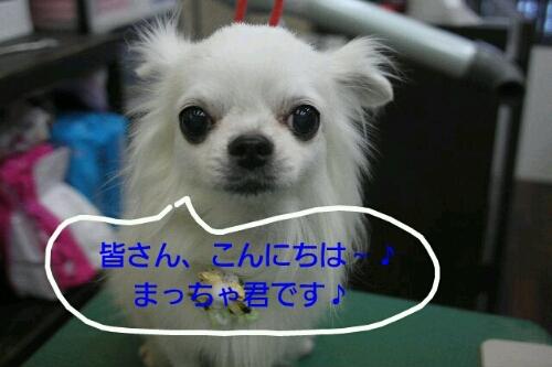 b0130018_0114641.jpg
