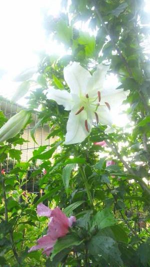 夏の庭_d0085018_1851814.jpg