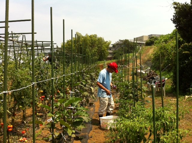 定植したリーキ&長葱に水遣りです・・・雨が恋しい・・・・・・!_c0222448_13244263.jpg