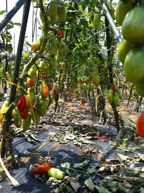 定植したリーキ&長葱に水遣りです・・・雨が恋しい・・・・・・!_c0222448_13252680.jpg
